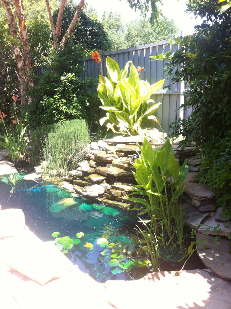 Clients Pond 