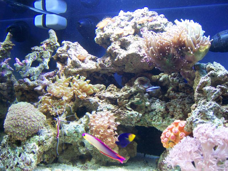 Marine Aquarium (Customer)