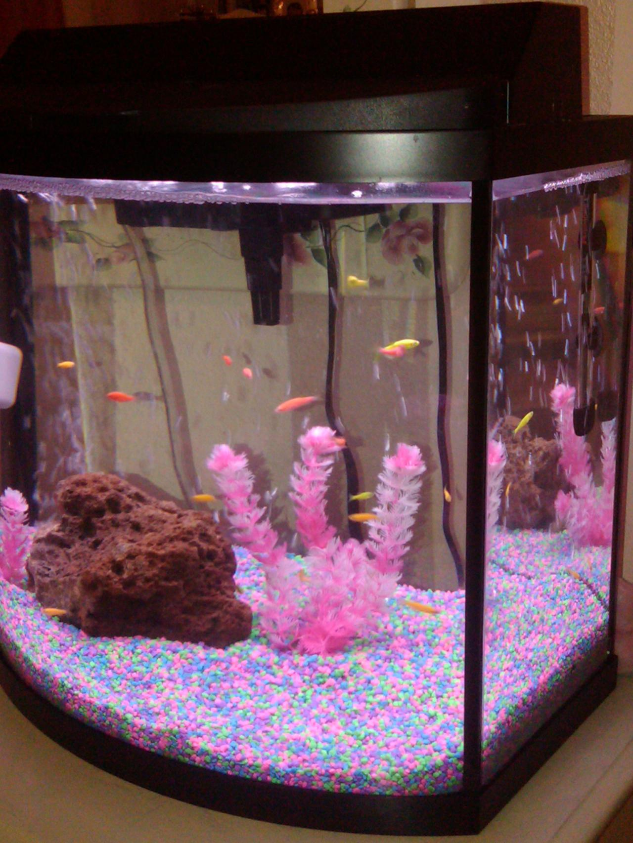 Fish tanks fish and fire on pinterest for Pink fish tank
